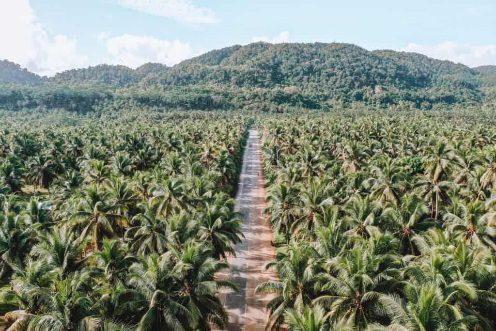 Siargao Palm Trees Road Drone