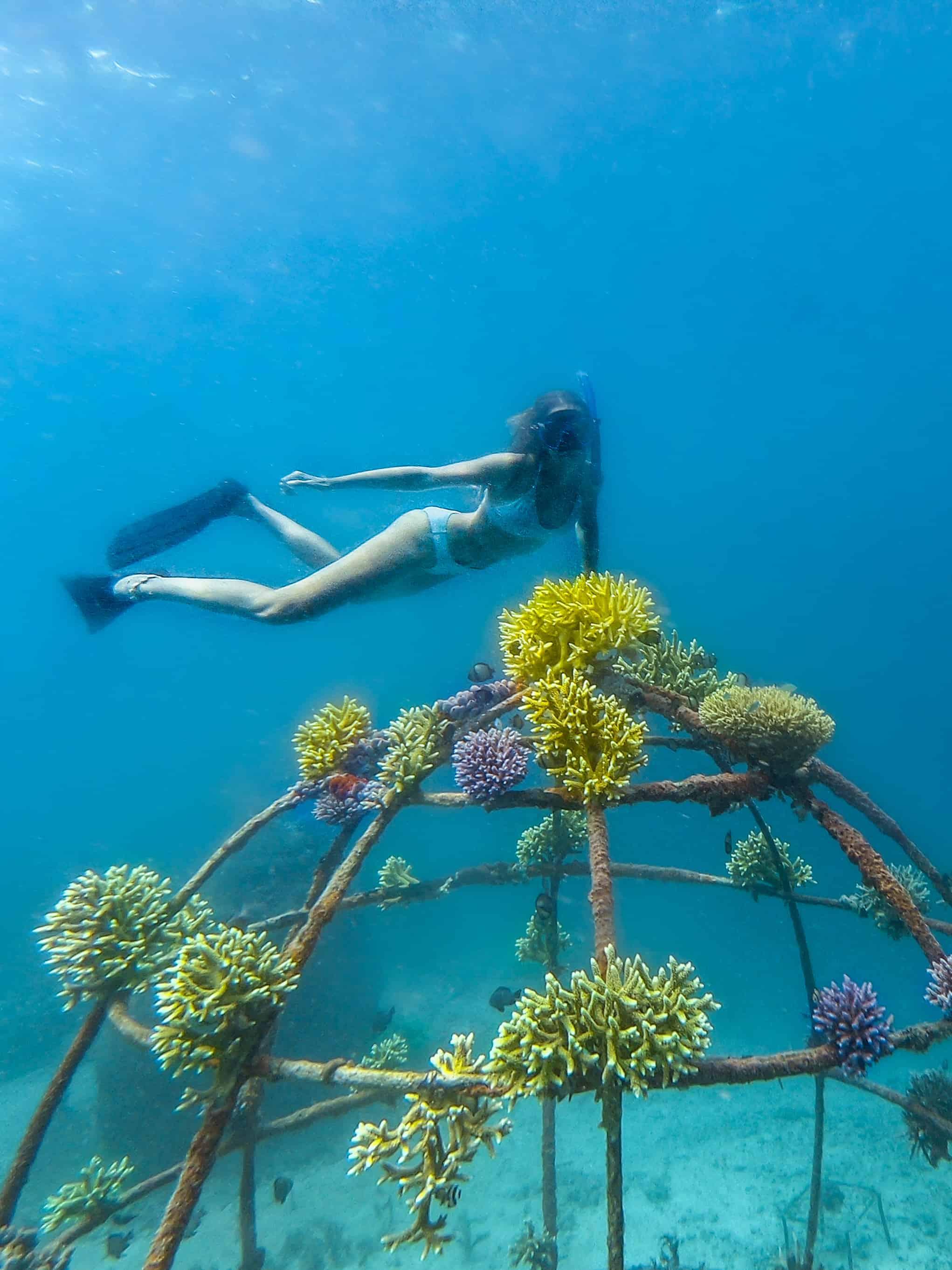 Woman Diving Coral Gardening