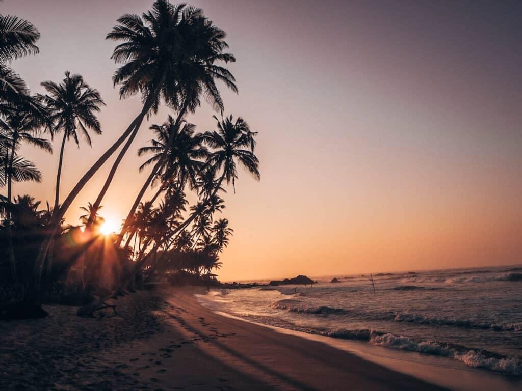 Dalawella Beach Palm Rope Swing Sunrise