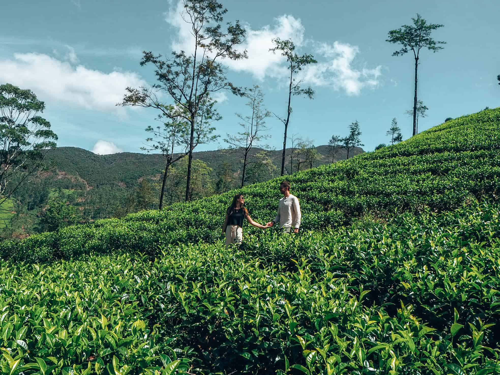 Couple walking in tea field at Damro plantation in Nuwara Eliya