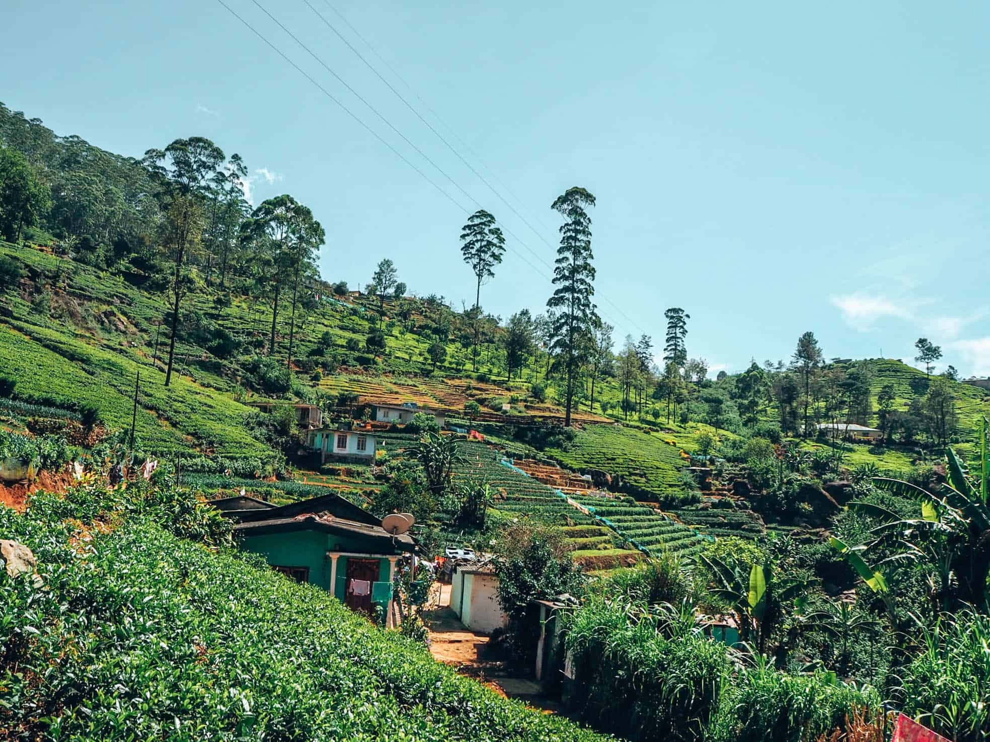 Houses in tea plantation at Nuwara Eliya