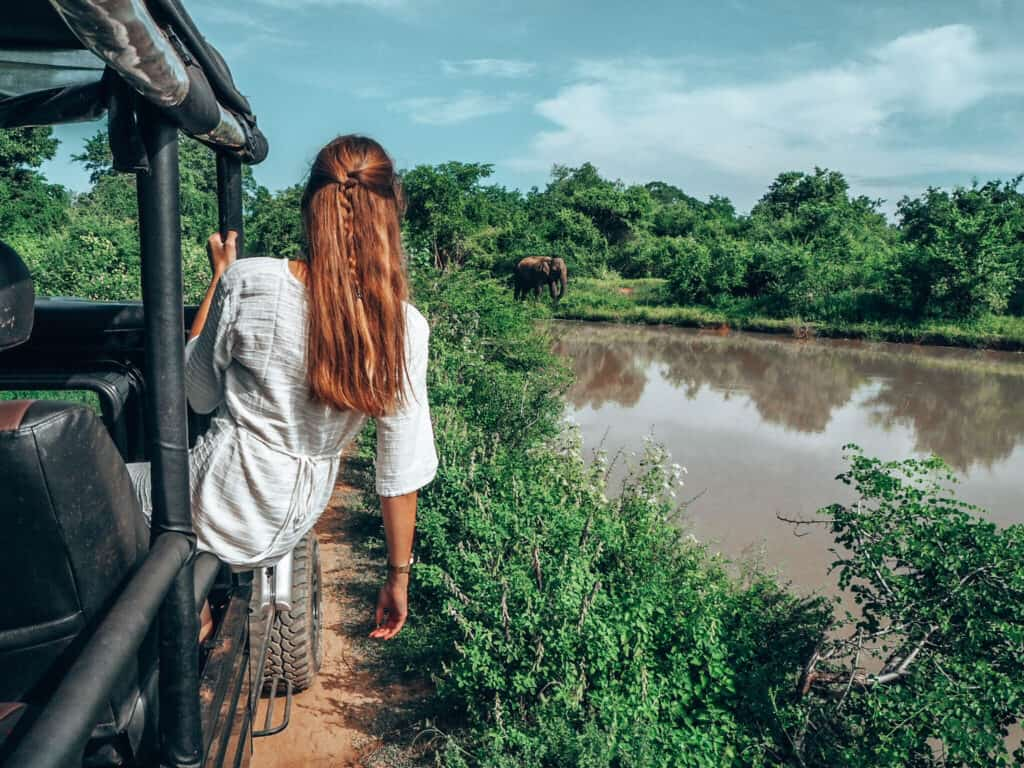 Women sitting on jeep and looking at Elephant in Udawalawe National Park Sri Lanka