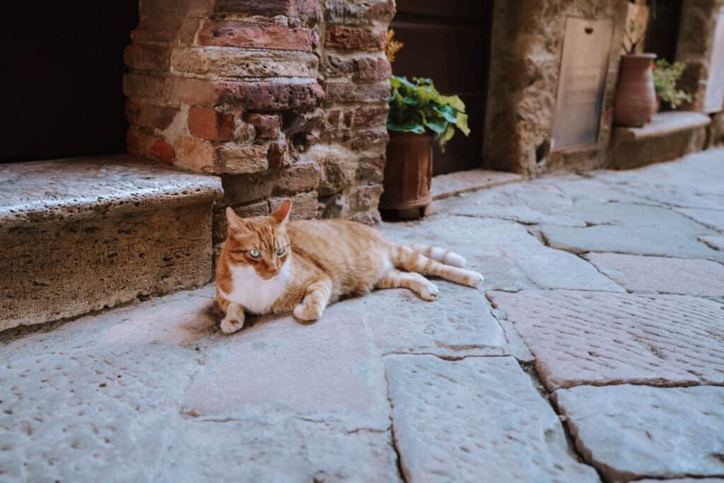 Tuscany Pienza Street Cat