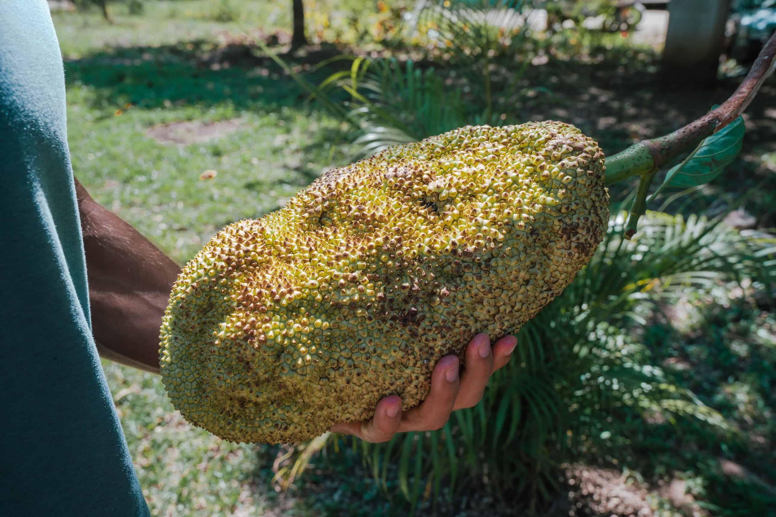 Jackfruit Farmers Market