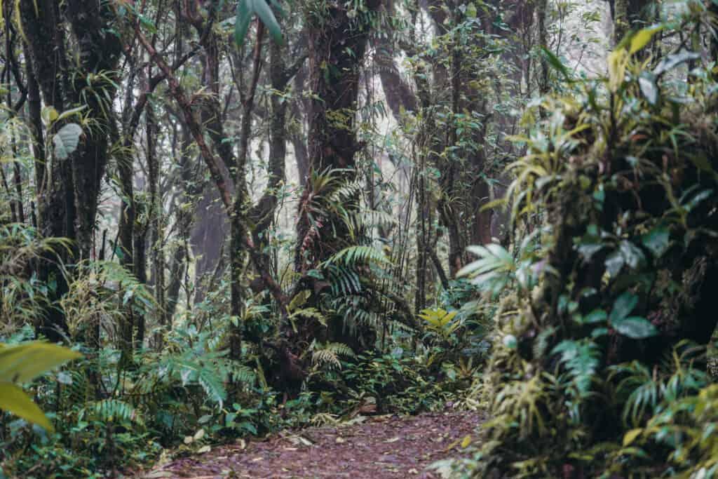 Walk through clouds in Monteverde Cloud Forest Costa Rica